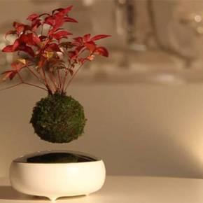 Bonsai flotante olevitador